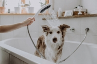 Furly Dog Shower / Hansgrohe